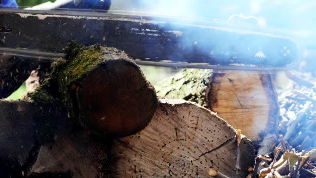 lumberjack cutting a tree trunk - motosega video stock e b–roll