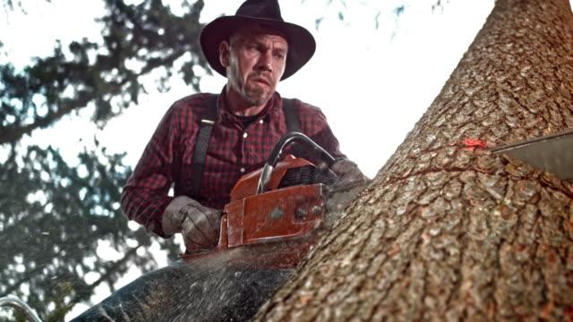 slo mo lumberjack cutting a tree with a chainsaw - motosega video stock e b–roll