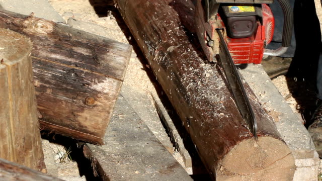 Lumberjack cutting log onto halves using chainsaw video