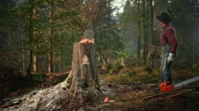 SLO MO Lumberjack felling a tree with an axe