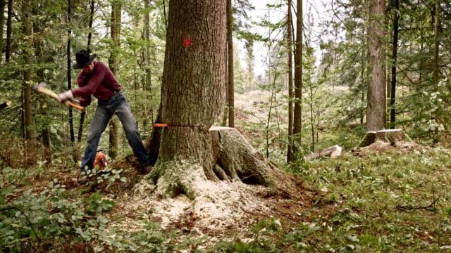 Lumberjack preparing to fell a tree using wedges video