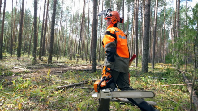 lumberman is walking along the forest with a chainsaw - motosega video stock e b–roll