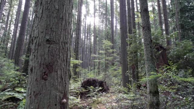 Lush Forest Pacific Northwest 4K UHD