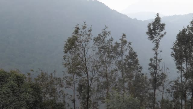 Lush Green Forest Mountain Greenery Cloud And Fog View From Highest Point in Yercaud Hills Shevaroyan Temple