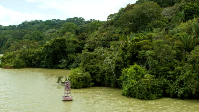 Lush Green Nature on the Banks of the Panama Canal video