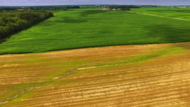 Lush Green Pastures, Corn Fields of Wisconsin, Aerial Flyover video