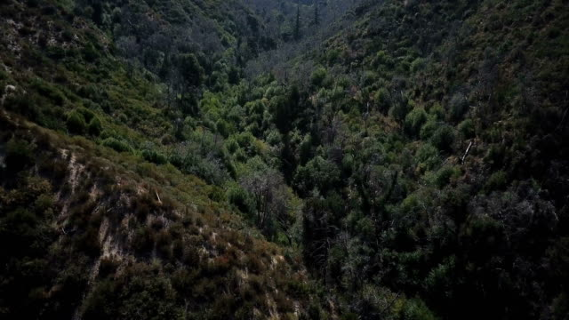 Lush Green Tree-Filled Valley in California video