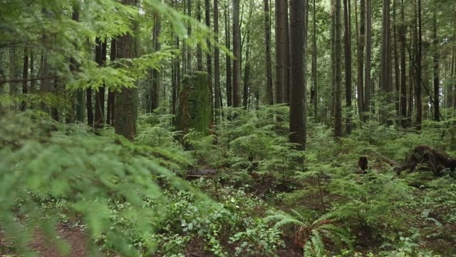 Lush Growth, Coastal Rainforest video