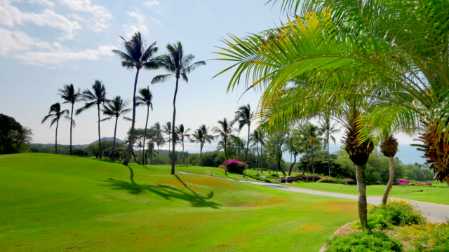 Lush Palm Tree Leaves and Palm Trees and Green Golf Course video