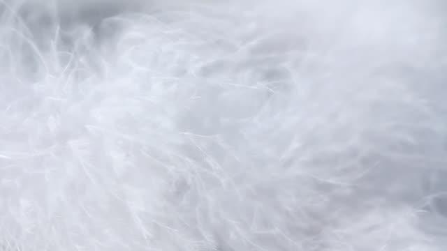 luxury backgrouund - päls textil bildbanksvideor och videomaterial från bakom kulisserna
