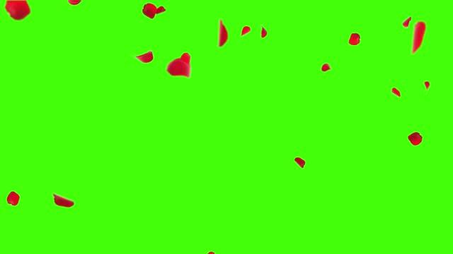 vídeos de stock, filmes e b-roll de pétalas de rosa frescas de luxo caindo no ar na white romantic loop background green screen. - primavera estação do ano