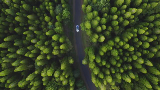 lyxig sedan körning i en grön tallskog - väg bildbanksvideor och videomaterial från bakom kulisserna