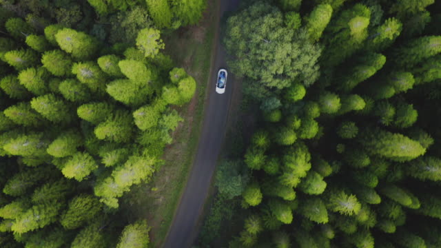 Luxury sedan driving in a green pine forest