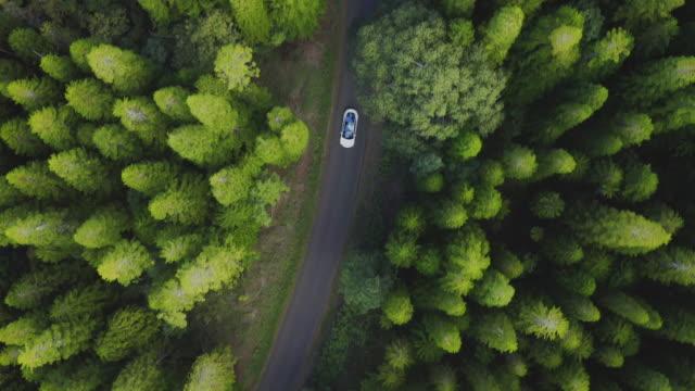 berlina di lusso che guida in una pineta verde - sostenibilità video stock e b–roll