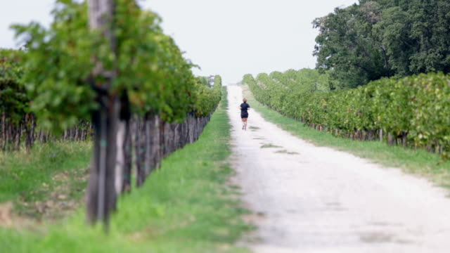 hd: macadam percorso con runner tra due campi di grapevines - uva riesling bianco video stock e b–roll