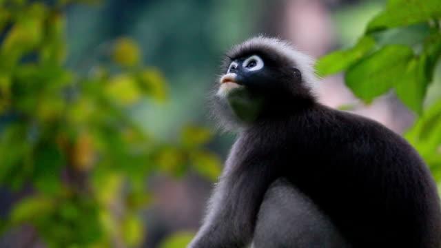 oynarken, yemek, atlama, tırmalamak makak maymunu - makak maymunu stok videoları ve detay görüntü çekimi