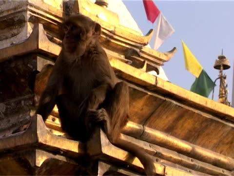 macaque sitting on a roof - stupa stok videoları ve detay görüntü çekimi