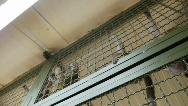 kafes makak tırmanmaya - makak maymunu stok videoları ve detay görüntü çekimi