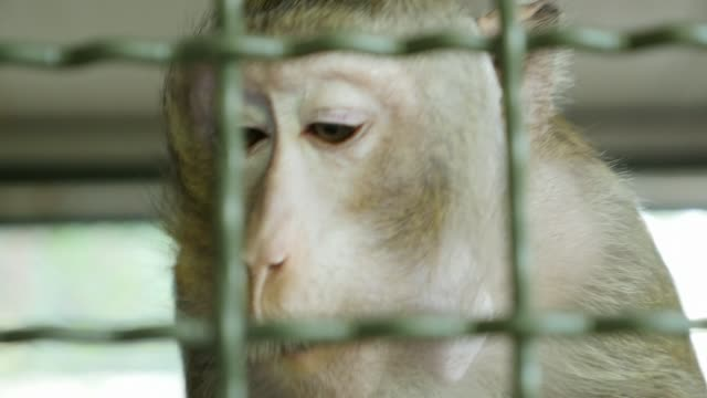 maymunların yakın çekim - makak maymunu stok videoları ve detay görüntü çekimi