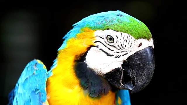 Macaw Bird video