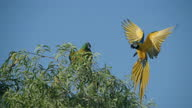istock Macaw Fly On A Tree Slow Motion 1297042372