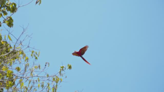 slo 모 잉 꼬는 나무에 - 하늘을 나는 새 스톡 비디오 및 b-롤 화면