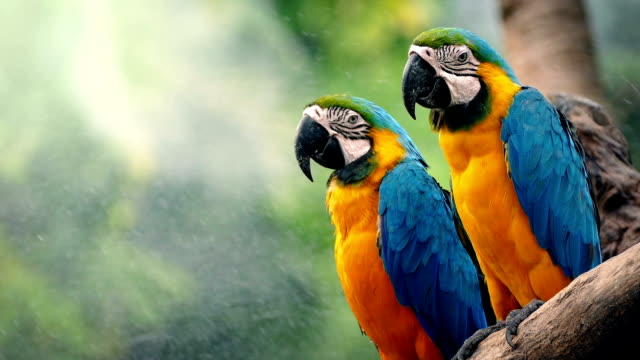 Macaw Parrots On Branch In Tropical Landscape video
