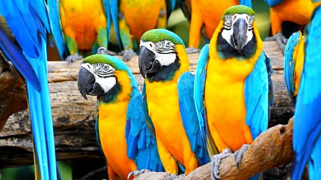 vídeos de stock e filmes b-roll de as araras aves - exotismo
