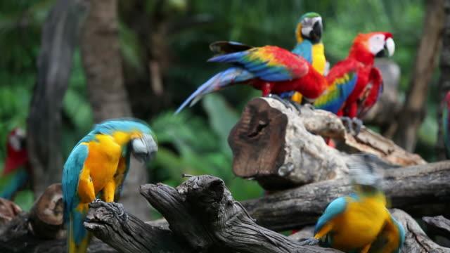 vidéos et rushes de aras - forêt tropicale humide