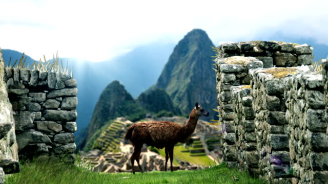 Machu Picchu - View From Behind Lama video