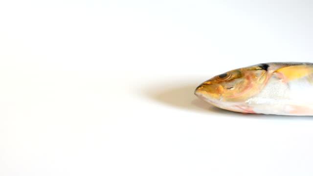 mackerel fish on white background video