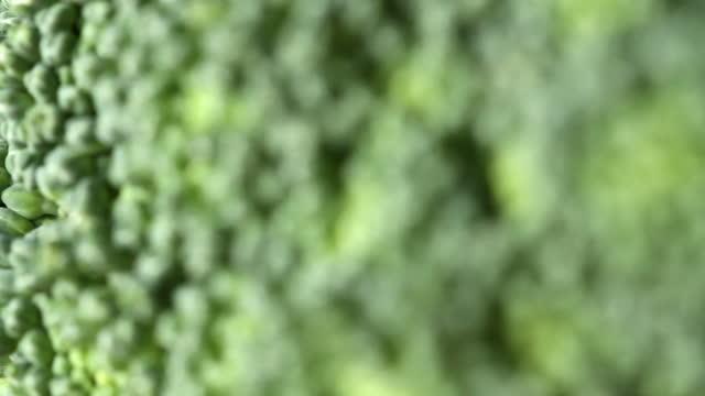 Makro Brokkoli – Video