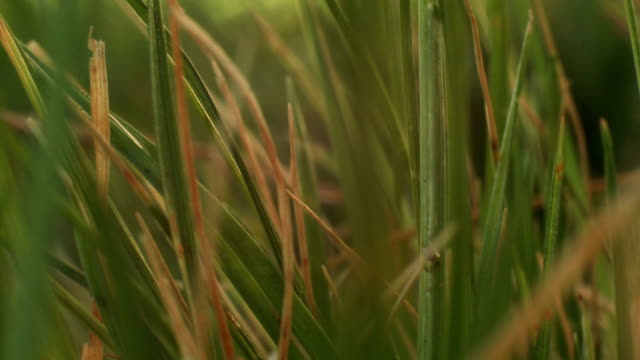 Macro clip of grass during sunrise video