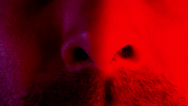 Macro closeup of man nose intensely sniffing or smelling or breathing video
