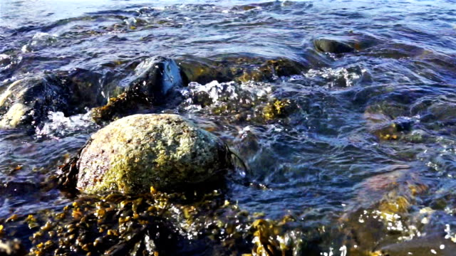 Macro closeup of rocky beach shore in Bar Harbor, Maine by Acadia National Park with gentle waves and tide splashing on rocks in water ashore, shore video