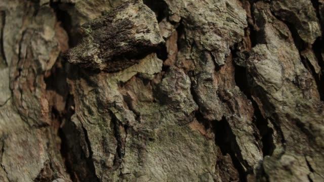 macro detail of tree bark texture. panoramic shot - drewno tworzywo filmów i materiałów b-roll