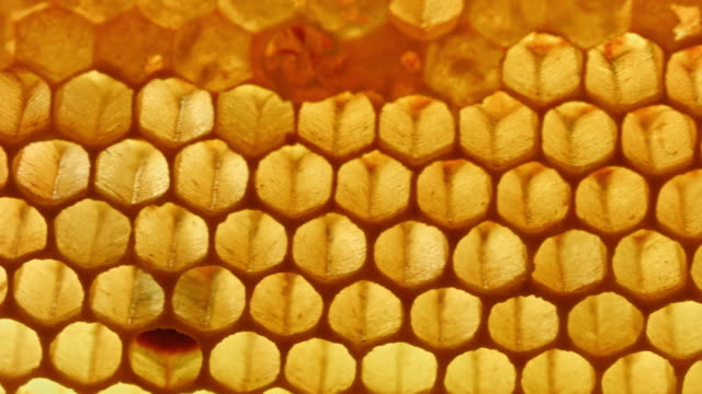 vídeos de stock e filmes b-roll de macro dolly: honeycomb - honeycomb