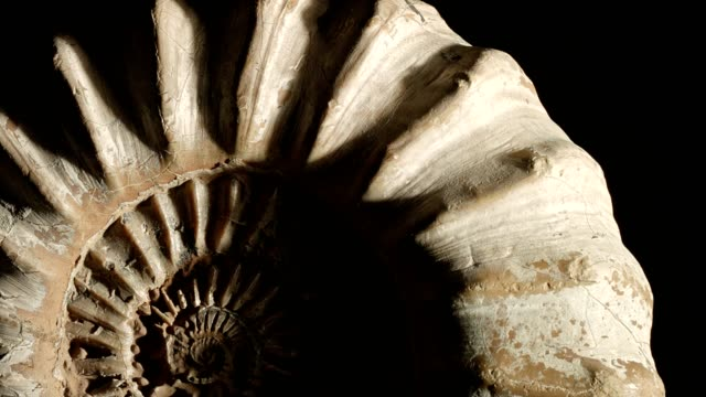 Macro dolly: Jurassic Ammonite on black Dolly shot of an Ammonite, found at the Jurassic Coast in England. Shot on black background. animal shell stock videos & royalty-free footage