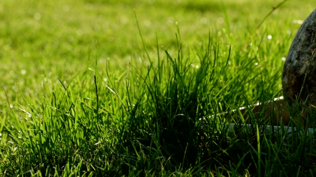 Macro dolly: perfect lawn video