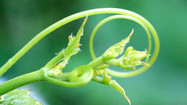 macro Flower video