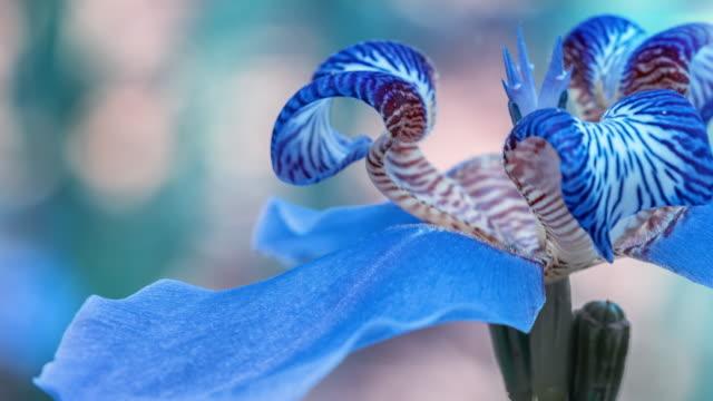 Macro Flower zoom 4K video