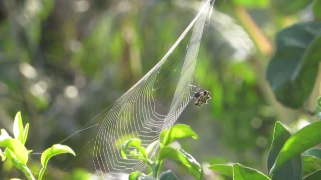makro insekt spindel vävare - spindel arachnid bildbanksvideor och videomaterial från bakom kulisserna