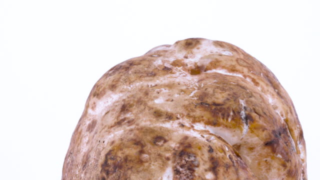 macro of a white truffle mushroom skin. rotating on the on the turntable isolated on the white background. closeup. - alta moda italy video stock e b–roll