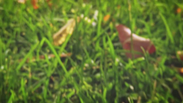 Macro of green grass illuminated by the sun and the fallen leaves lying on