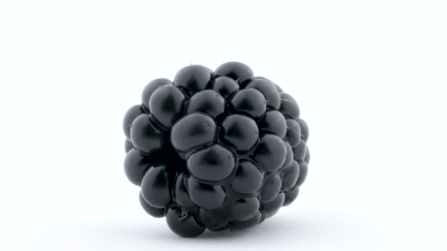 vídeos de stock e filmes b-roll de macro of one blackberry fruit rotated on the turntable isolated on the white background. close up. - baga