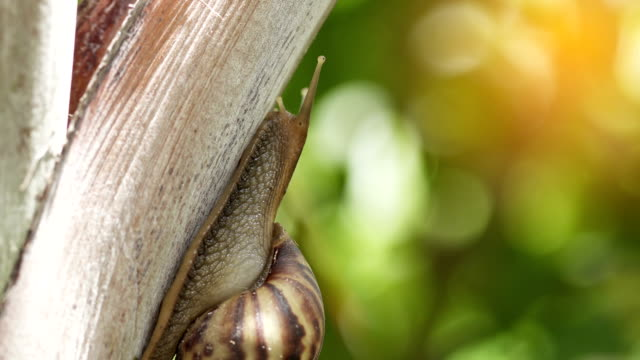 Macro of snail crawling in nature. UHD 4k 3840x2160. video