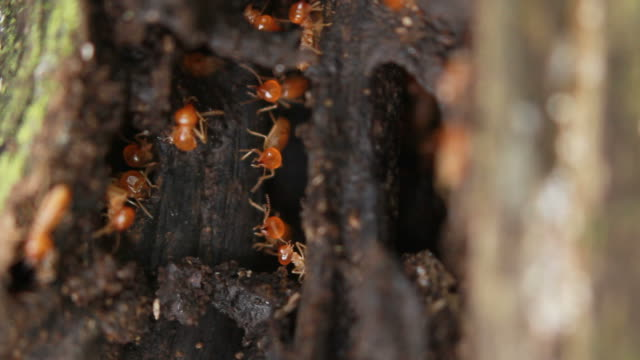 Macro of termites on a plank of wood. video