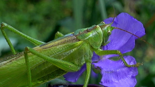 macro Scene With a Locust video