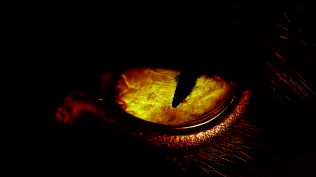 vidéos et rushes de macro shot d'un chat noir s eye - oeil d'animal