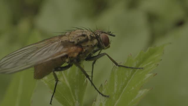 macro shot of a fly on a leaf - styria filmów i materiałów b-roll